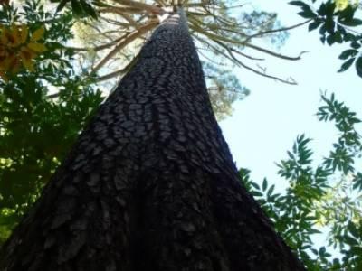 El Castañar de El Tiemblo , Un bosque mágico;senderismo por la pedriza;madera tejo
